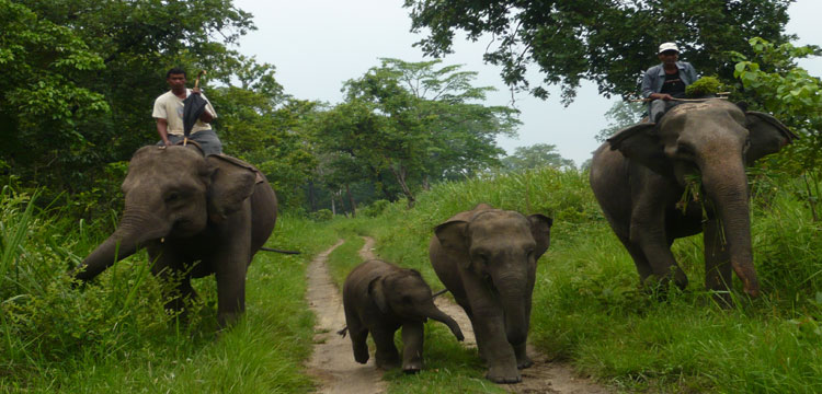 Nepal Wildlife Safari Tour |Jungle Safari | Elephant Ridding | Evasion