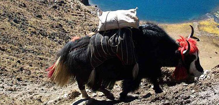 The Druk Path Trek in Bhutan -12 Days | Discover The Wonders Of Bhutan